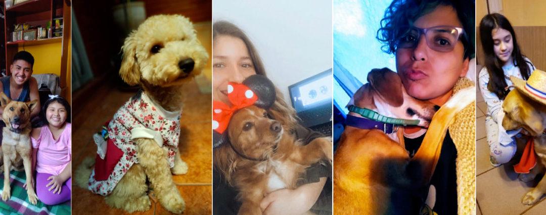 Con nuestras mascotas cerramos el Mes de la Familia 2020