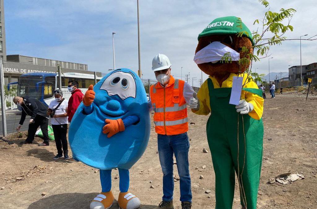 FCAB continúa apoyo a campaña 'Un niño, un árbol' en Antofagasta